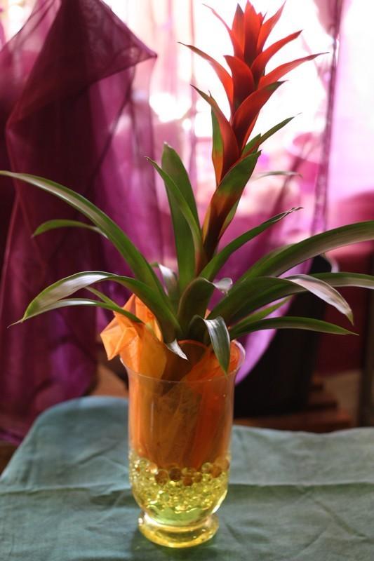 plantes vertes cactus et d corations isabelle fleurs. Black Bedroom Furniture Sets. Home Design Ideas
